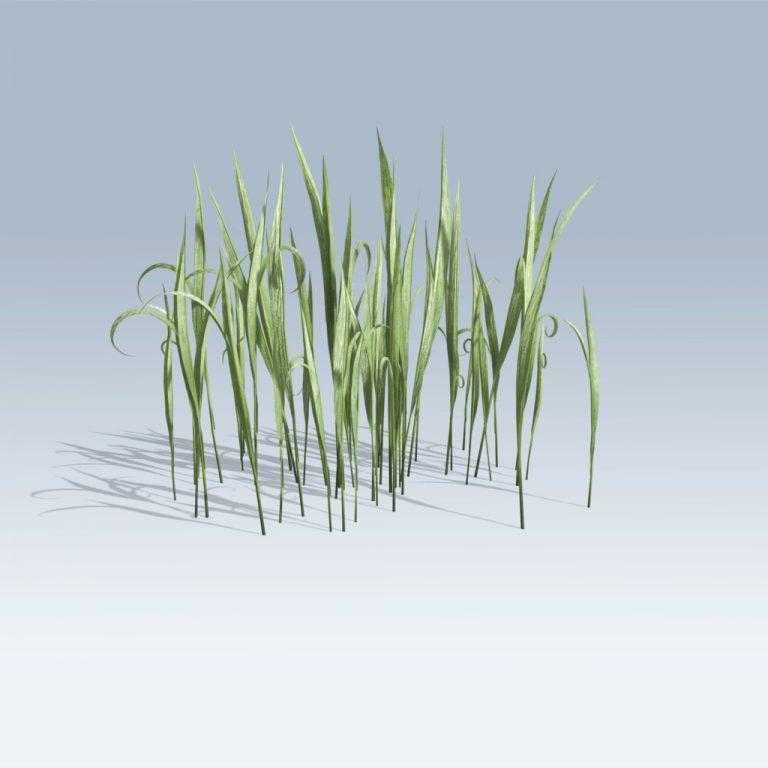 Fantasy Grass (v6)