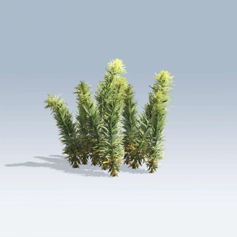 Horseweed (v6)