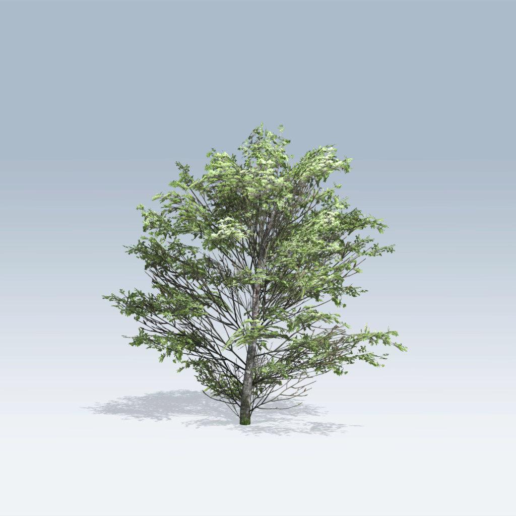 Maple Shrub (v6)