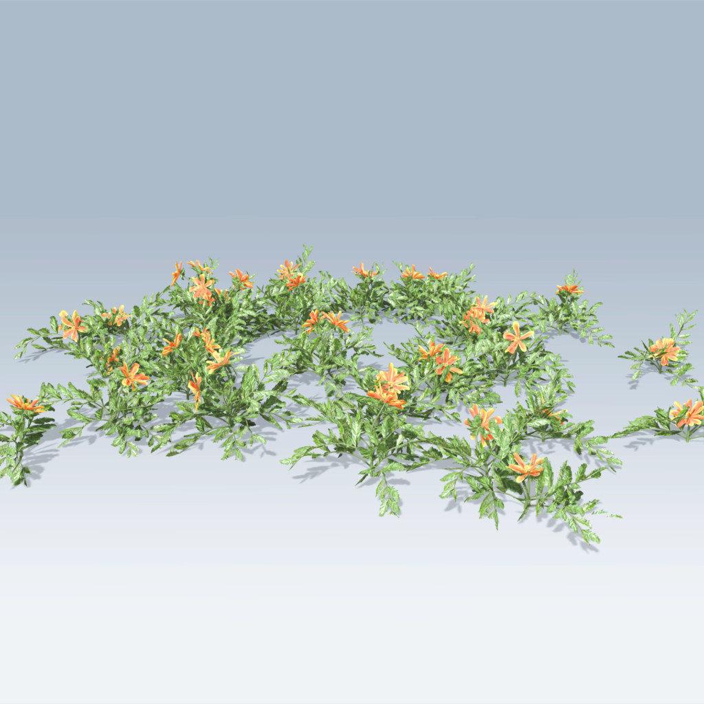 Marigold (v6)