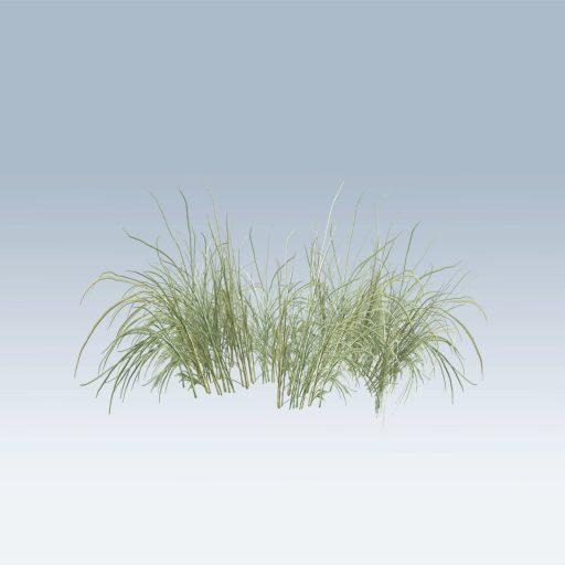 Plantation Grasses (v6) 2