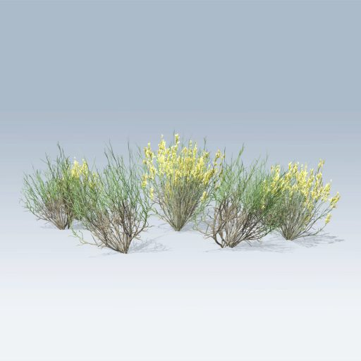 Plantation Grasses (v6) 3