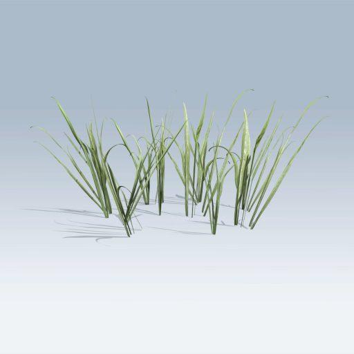 Plantation Grasses (v6) 5