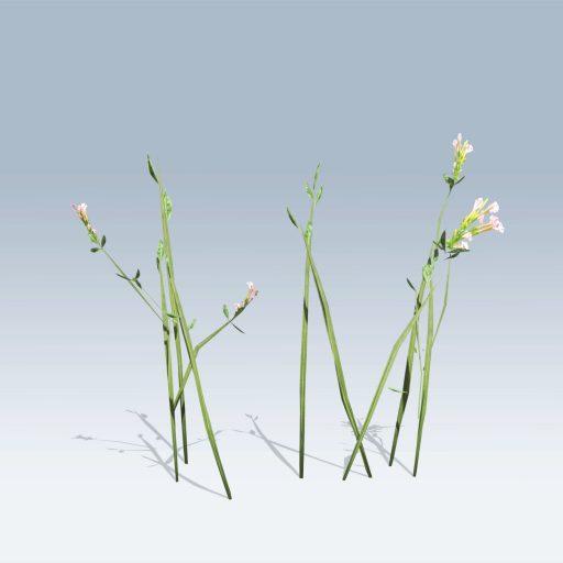Plantation Grasses (v6) 6