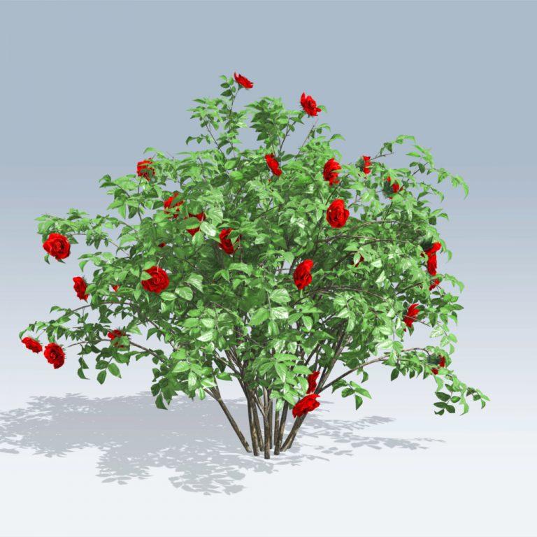 Red Rose Bush (v6)
