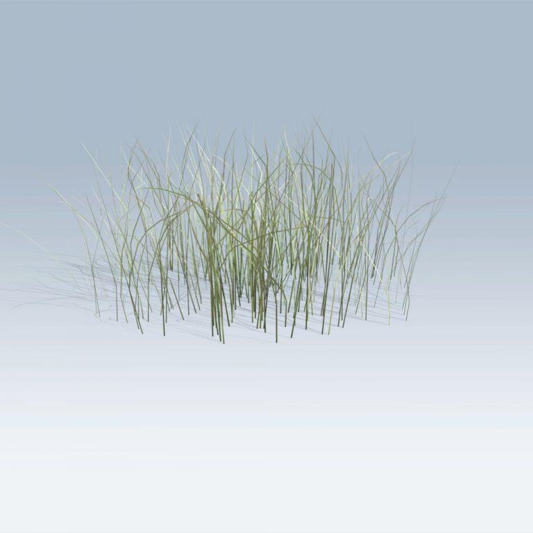 Rough Grass (v6)