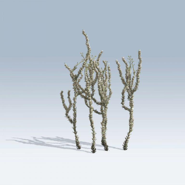Sagebrush (v6)