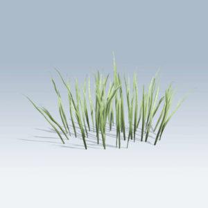 Thick Grass (v6)