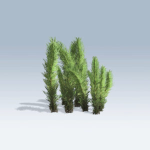 Tumble Grass (v6)