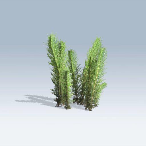 Tumble Grass (v6) 2