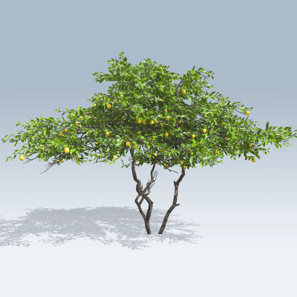 Definition of Tree at