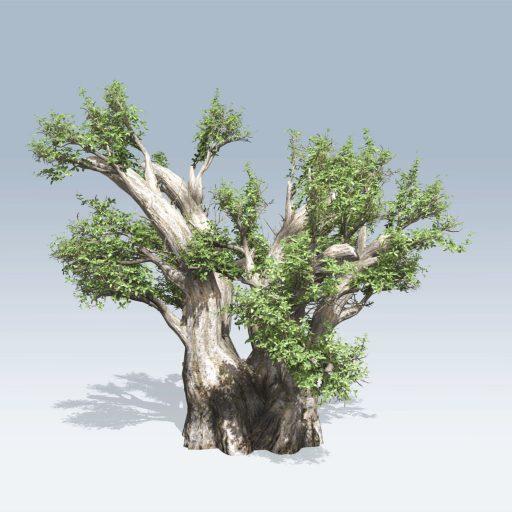 African Baobab (v6) 1