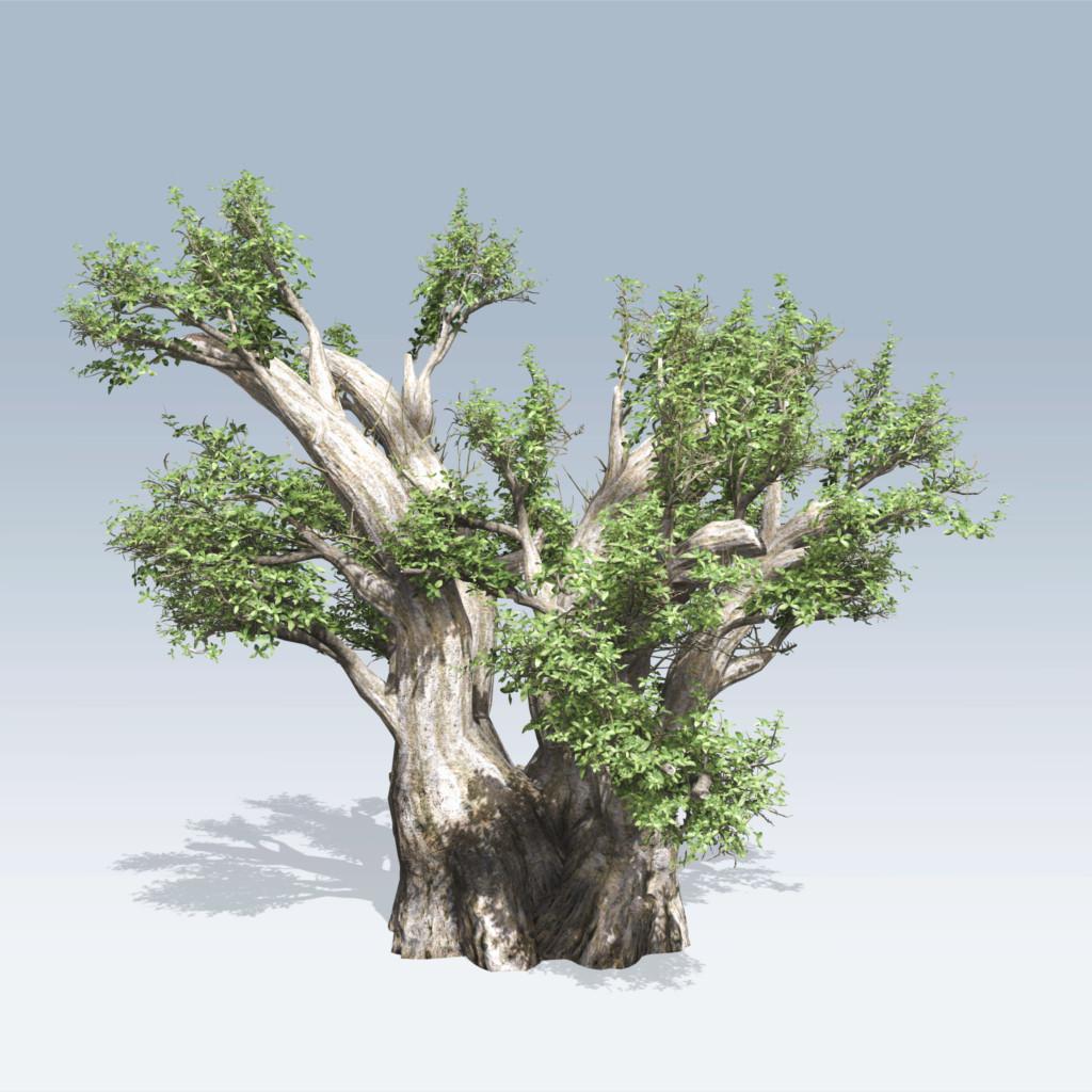 African Baobab (v6)
