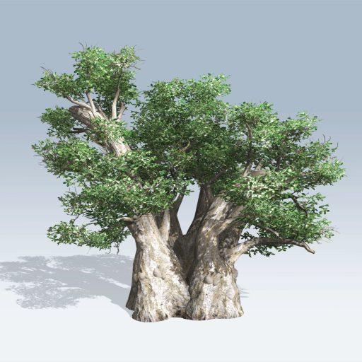 African Baobab (v6) 2