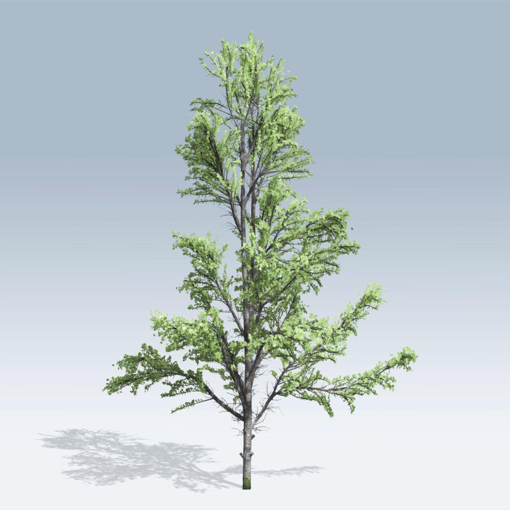 Mountain Maple (v6)