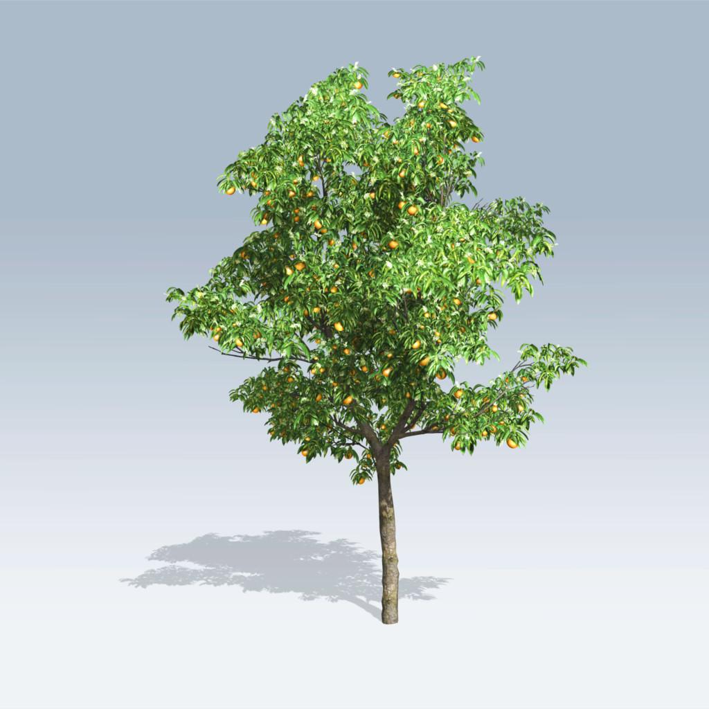 Orange tree v6 speedtree store