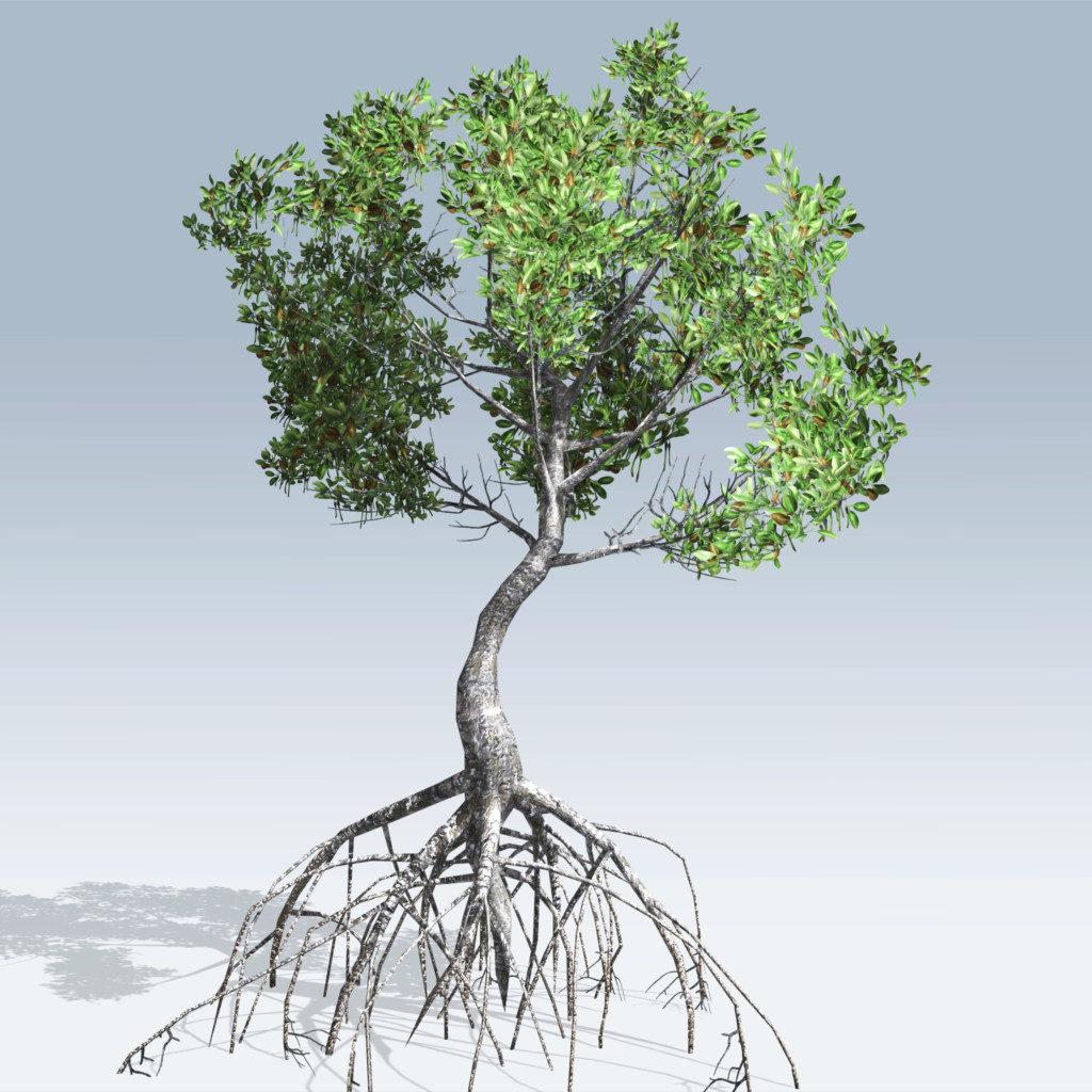 Red Mangrove (v6)