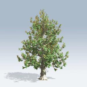 Southern Magnolia (v6)