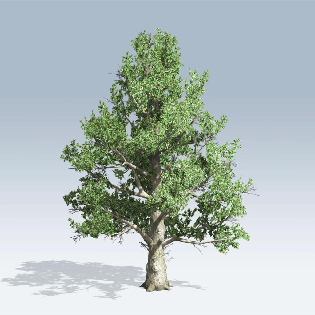Southern magnolia v6 speedtree for Magnolia tree