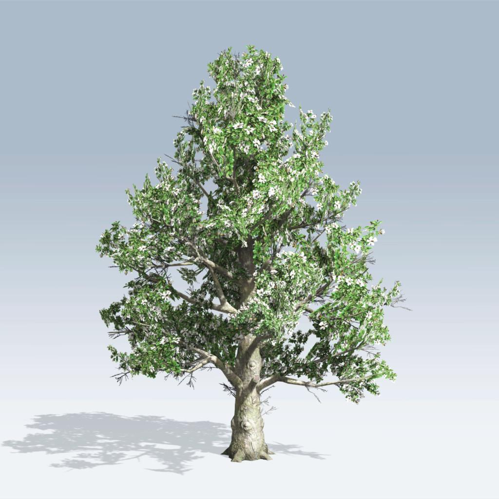Southern Magnolia v6  SpeedTree