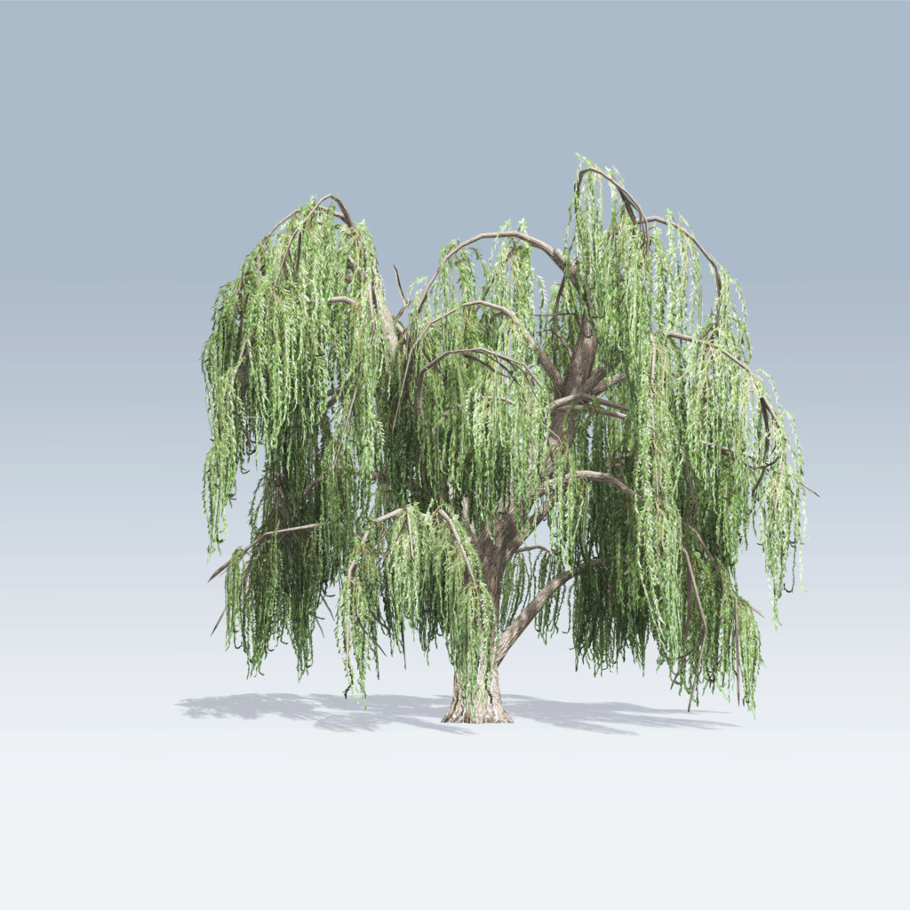 Weeping Willow Porn 63
