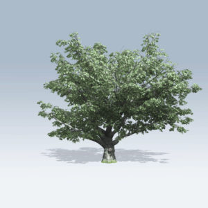White Oak (v6)