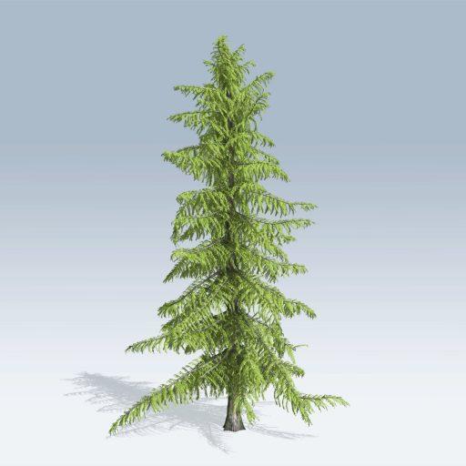 Alaska Cedar (v6) 1