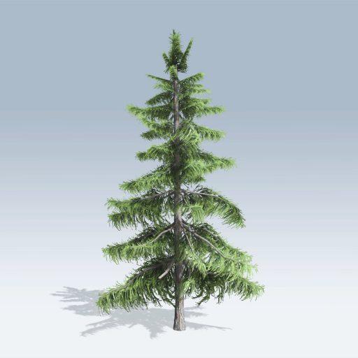 Alaska Cedar (v6) 2