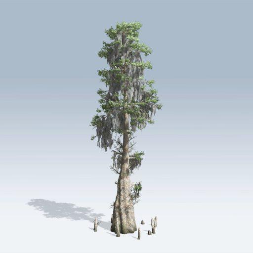 Bald Cypress (v6) 1