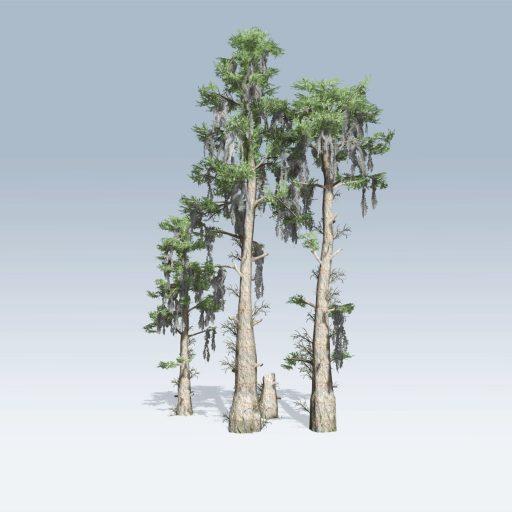 Bald Cypress (v6)