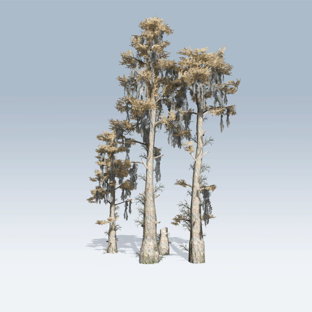 Bald Cypress (v6) – SpeedTree Store