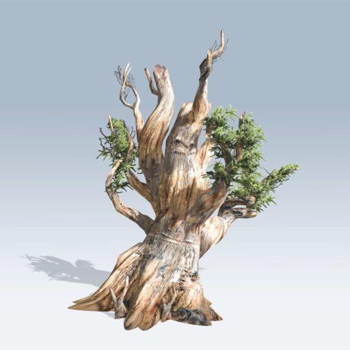 Bristlecone Pine (v6) 2