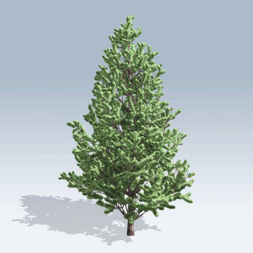 Christmas Scotch Pine (v6) 1