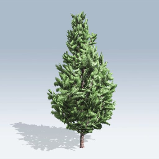 Christmas Scotch Pine (v6) 2