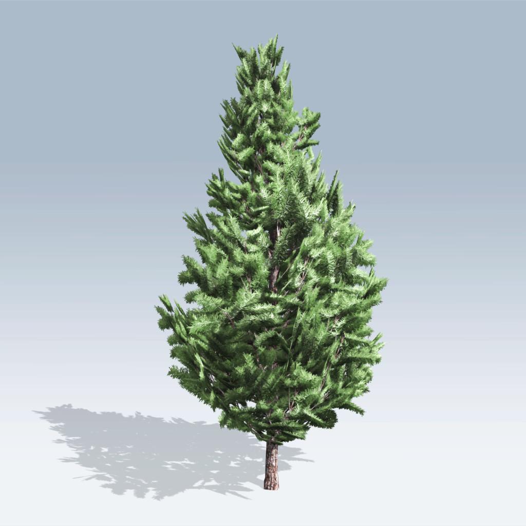 Christmas Scotch Pine (v6)