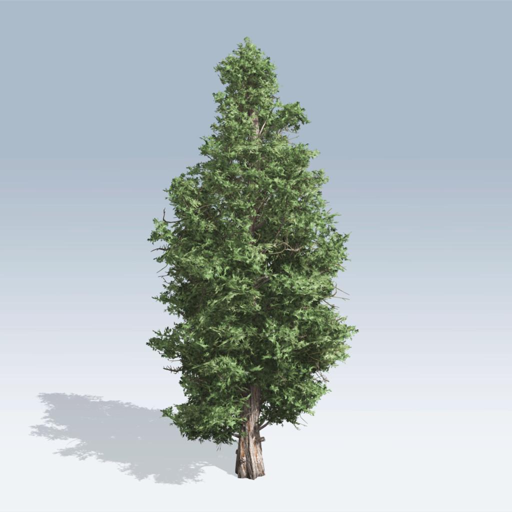 Eastern Red Cedar (v6) - SpeedTree