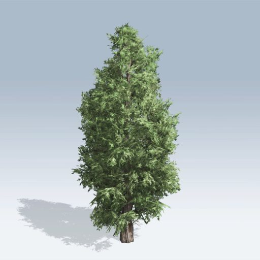 Eastern Red Cedar (v6) 2