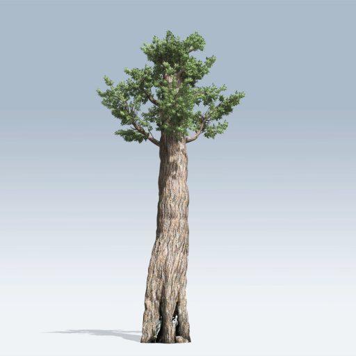 Giant Redwood (v6) 1