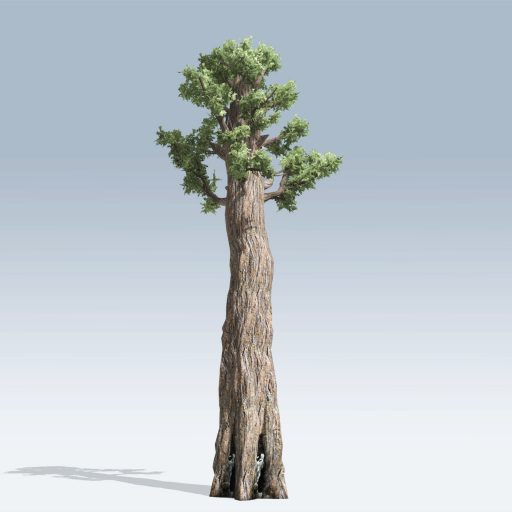Giant Redwood (v6)