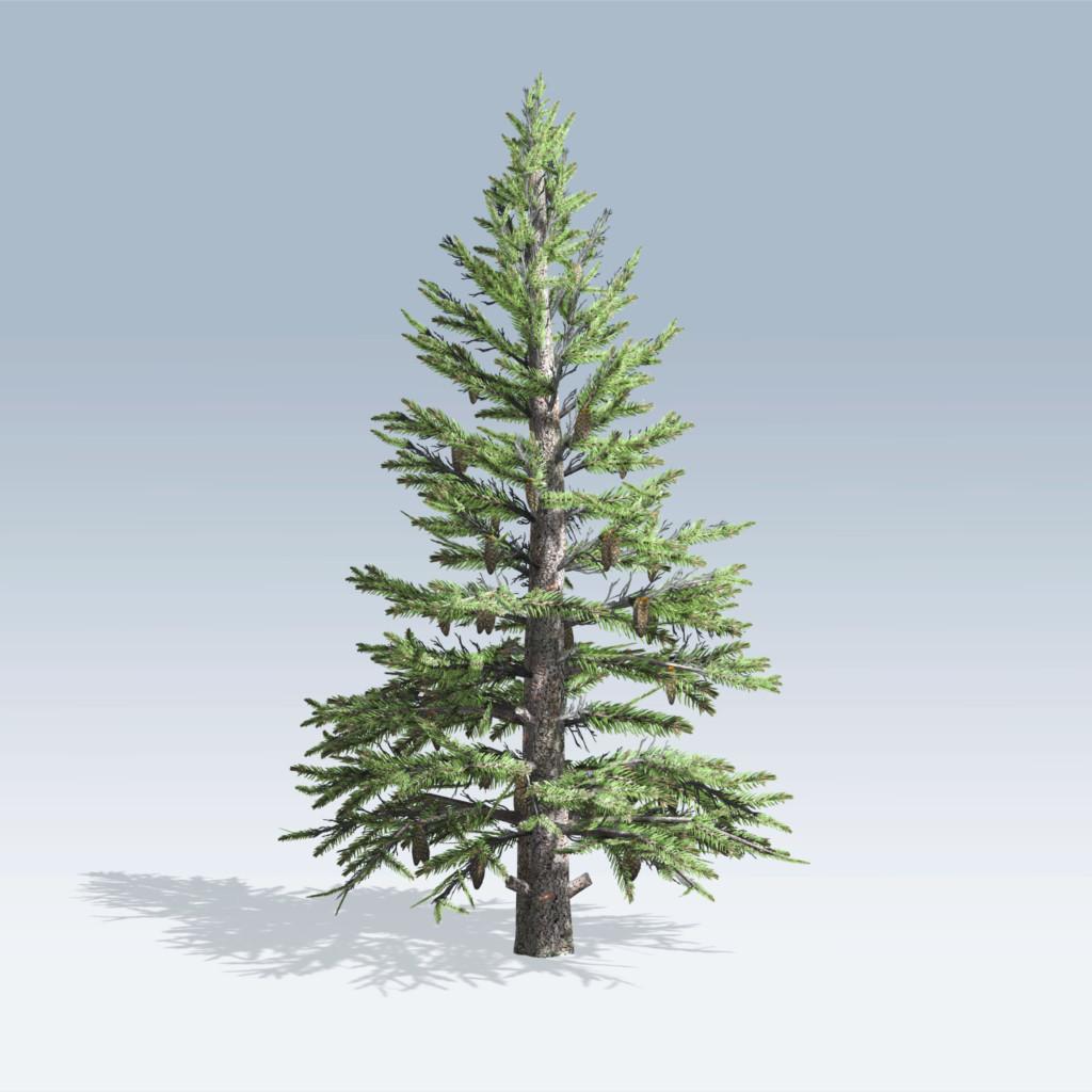 Norway spruce v6 49 00 add to cart sku norway spruce v6 categories