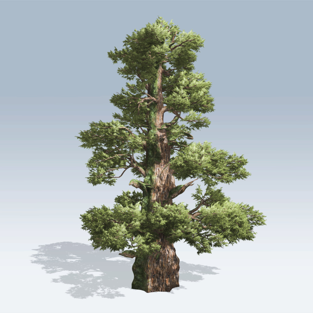 Western juniper v6 speedtree for The juniper
