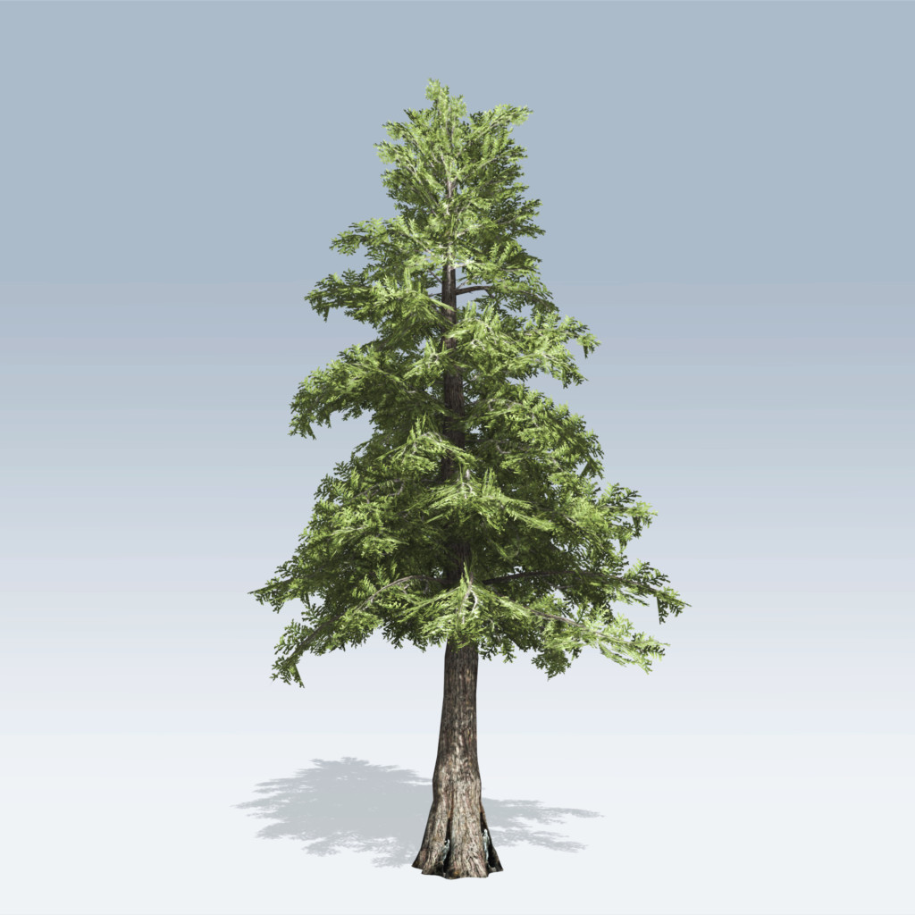 Western Red Cedar ~ Western red cedar v speedtree