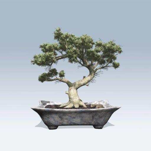 Bonsai (v6) 1
