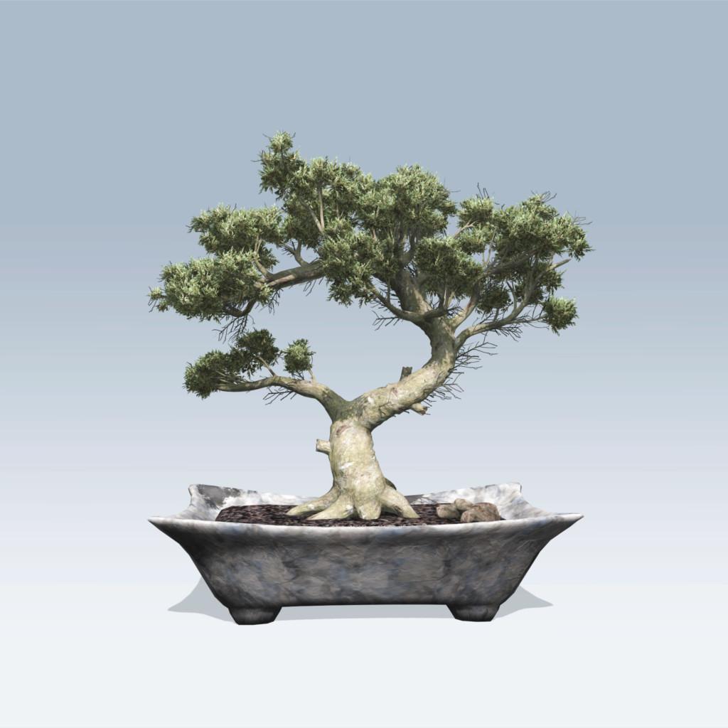 Bonsai (v6)
