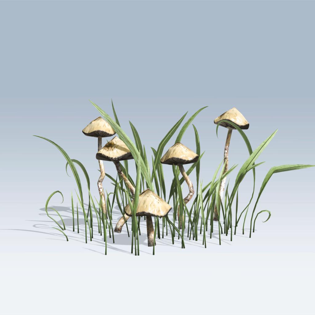 Hand Drawn Mushrooms (v6)