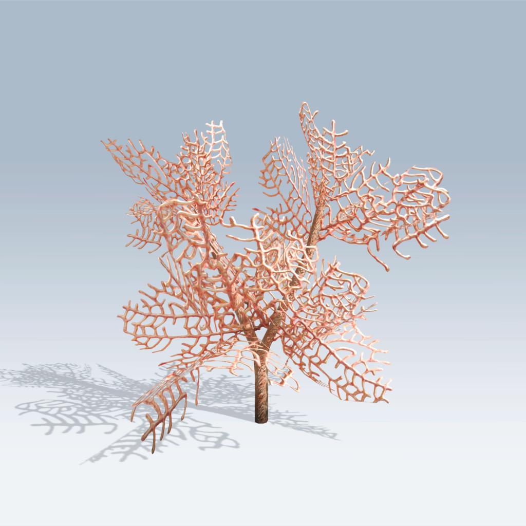 Fan coral v6 speedtree fan coral v6 publicscrutiny Images