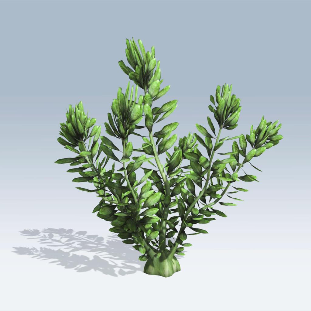 hydrilla  speedtree