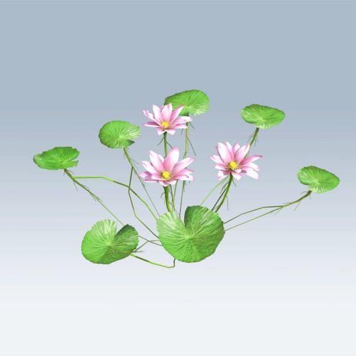 Lotus Flower (v6)