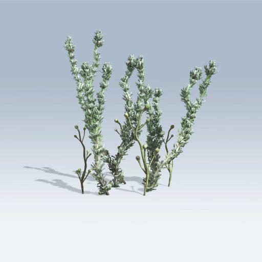 Pond Weed (v6)