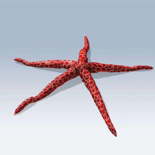 Starfish (v6)